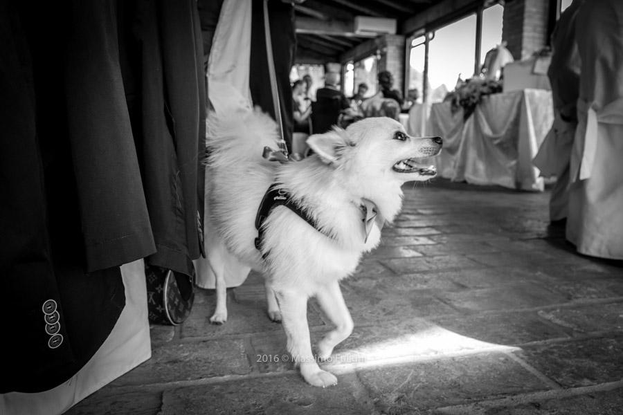 foto-matrimonio-la-gaiana-bologna-075